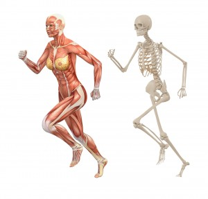 Skelett Skeleton Muskel Muscle Frau Woman laufen